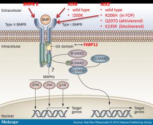 signalproteine